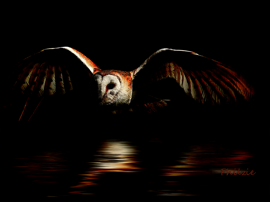 """Midnight Flight"" by Phil Jones, Invited Artist Gallery"